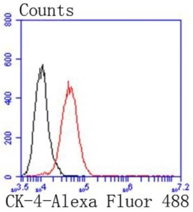 Cytokeratin4 Rabbit anti-Human, Clone: SN74-03, Novus Biologicals 100µL