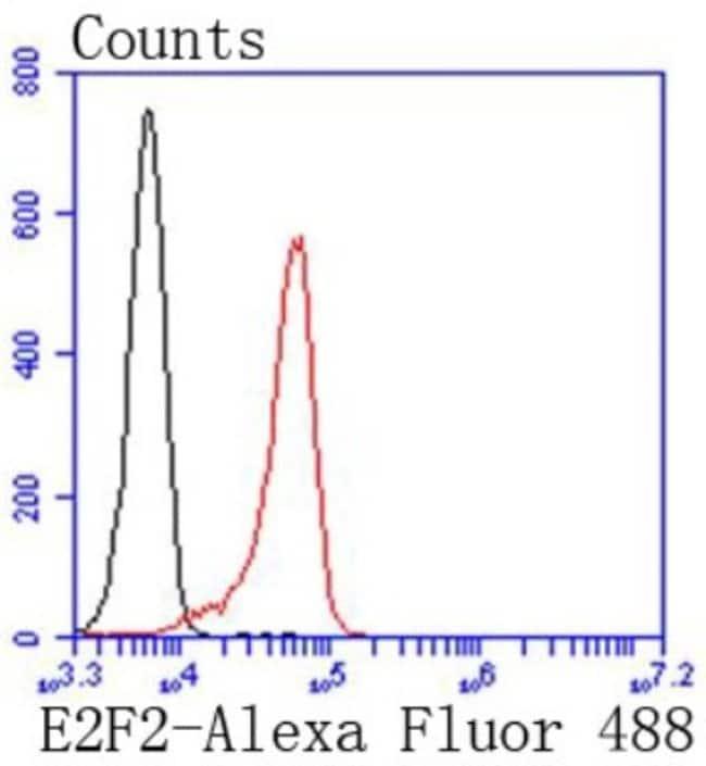 E2F-2 Rabbit anti-Human, Clone: SN201-04, Novus Biologicals 100µL