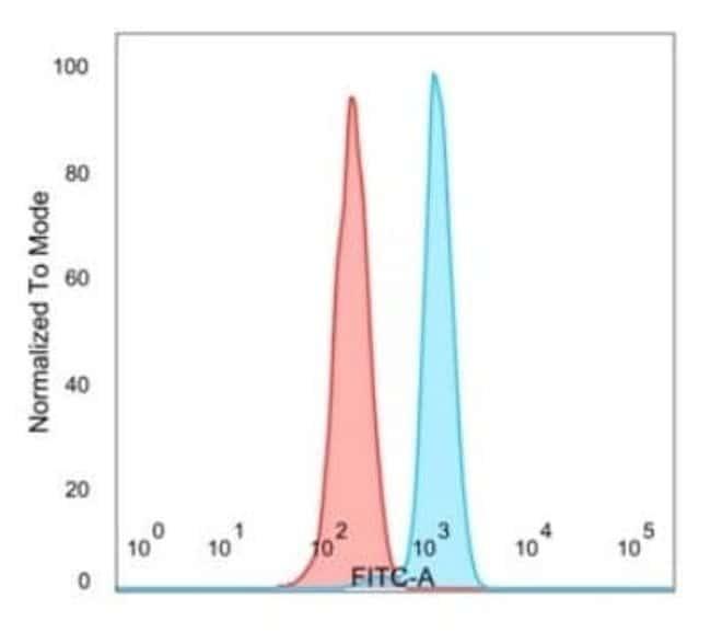 E4F1 Mouse anti-Human, Clone: PCRP-E4F1-2D1, Novus Biologicals:Antibodies:Primary