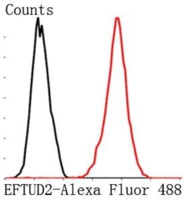 EFTUD2 Mouse anti-Human, Clone: 1-D10-A1, Novus Biologicals 100µL