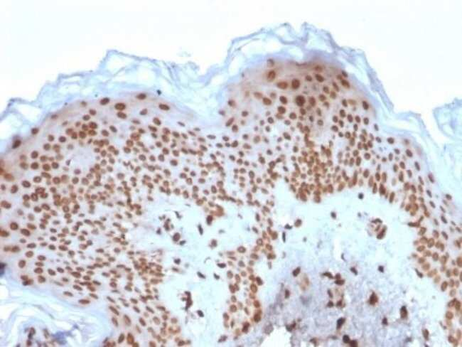 Emerin, Mouse anti-Human, Clone: EMD/2167, Novus Biologicals:Antibodies:Primary