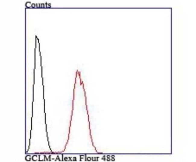 GCLM Rabbit anti-Human, Mouse, Rat, Clone: JM93-61, Novus Biologicals 100