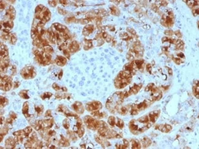 GP2 Mouse anti-Human, Clone: GP2/1805, Novus Biologicals:Antibodies:Primary