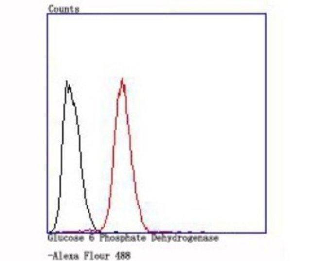 Glucose 6 Phosphate Dehydrogenase Rabbit anti-Human, Mouse, Clone: JA31-40,