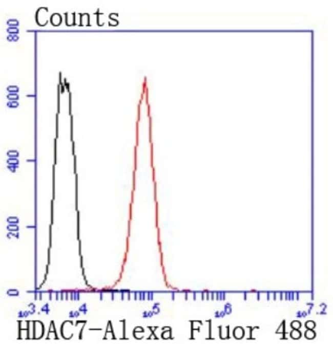 HDAC7 Rabbit anti-Human, Clone: SD082-4, Novus Biologicals 100µL