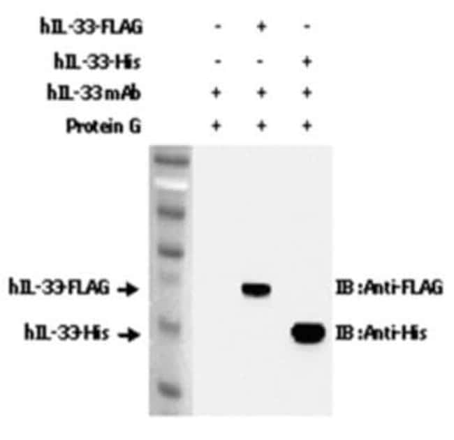 IL-33 Mouse anti-Human, Clone: IL33305B, Novus Biologicals:Antibodies:Primary