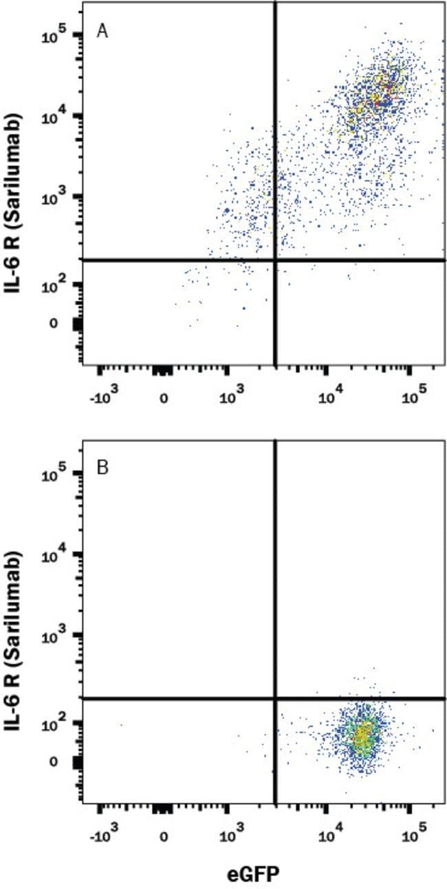 IL-6R alpha, Human anti-Human, Clone: Hu137, R:Antibodies:Primary Antibodies