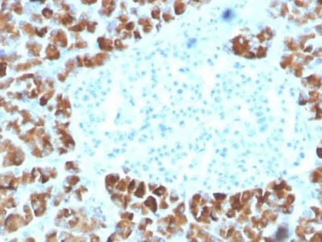 INSM2 Mouse anti-Human, Clone: INSM2/4291, Novus Biologicals:Antibodies:Primary