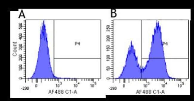 Integrin alpha 4/CD49d Rabbit anti-Human, Clone: Natalizumab, Novus Biologicals