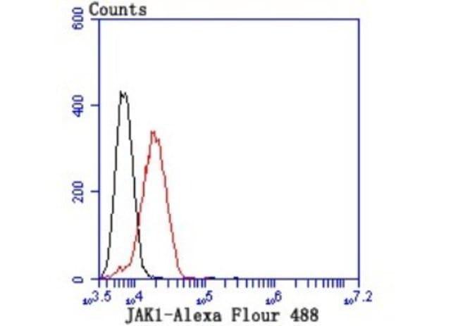 Jak1 Rabbit anti-Human, Mouse, Rat, Clone: JM75-03, Novus Biologicals 100