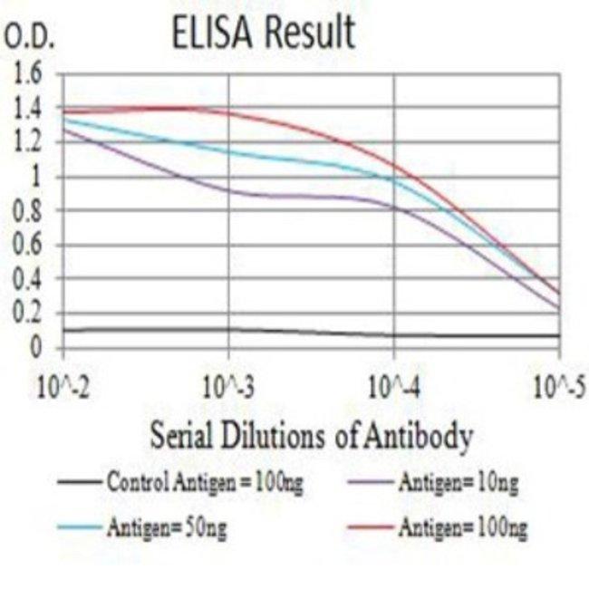 LAMP-2/CD107b Mouse anti-Human, Mouse, Rat, Clone: 8E2F2, Novus Biologicals
