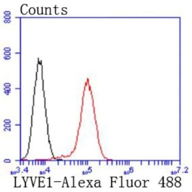 LYVE-1 Rabbit anti-Human, Clone: JF0979, Novus Biologicals 100µL