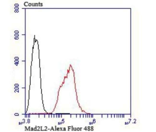 MAD2L2 Rabbit anti-Human, Mouse, Rat, Clone: JU99-23, Novus Biologicals