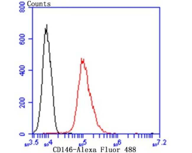 MCAM/CD146, Rabbit anti-Human,Mouse,Rat, Clone: JB42-35, Novus Biologicals