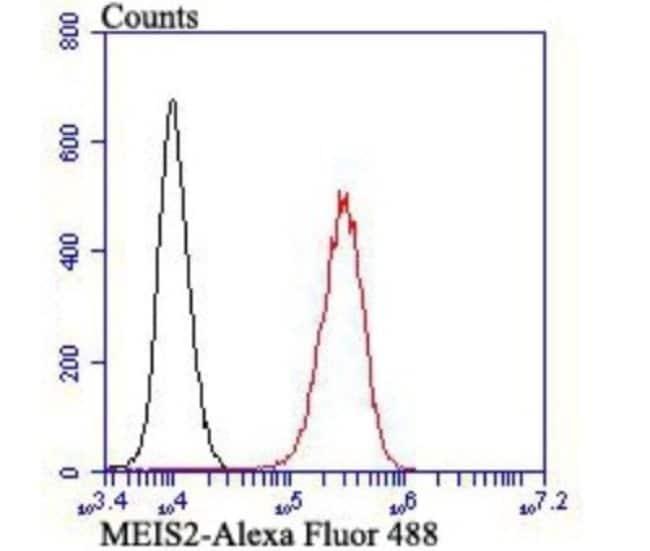 MEIS2 Rabbit anti-Human, Mouse, Clone: JB40-38, Novus Biologicals 100 µl;