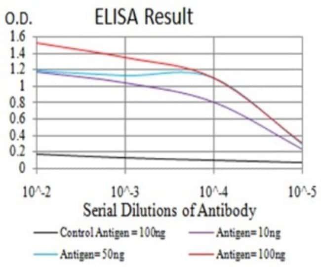 MOBKL1B Mouse anti-Human, Clone: 3E7B2, Novus Biologicals 0.1 ml; Unconjugated