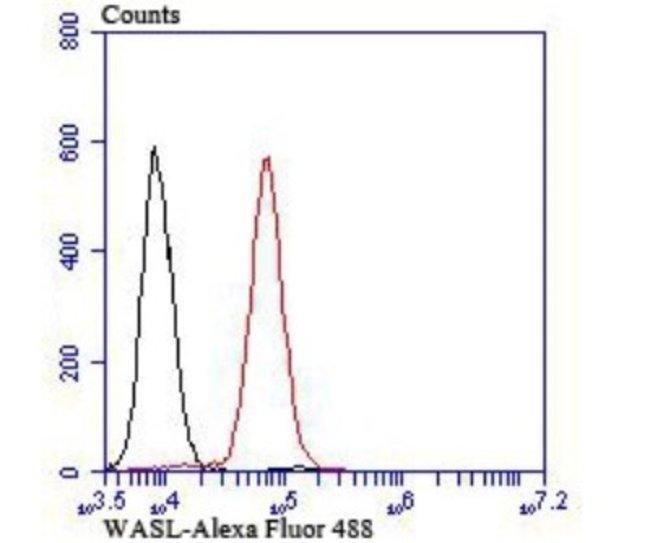 N-WASP Rabbit anti-Human, Mouse, Clone: JU07-31, Novus Biologicals 100