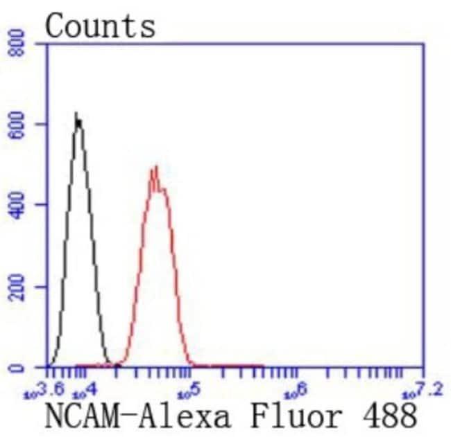 NCAM-1/CD56 Rabbit anti-Human, Mouse, Zebrafish, Clone: JF1021, Novus Biologicals