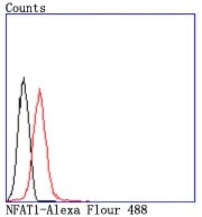 NFATC2/NFAT1 Rabbit anti-Human, Clone: JA11-08, Novus Biologicals 100µL