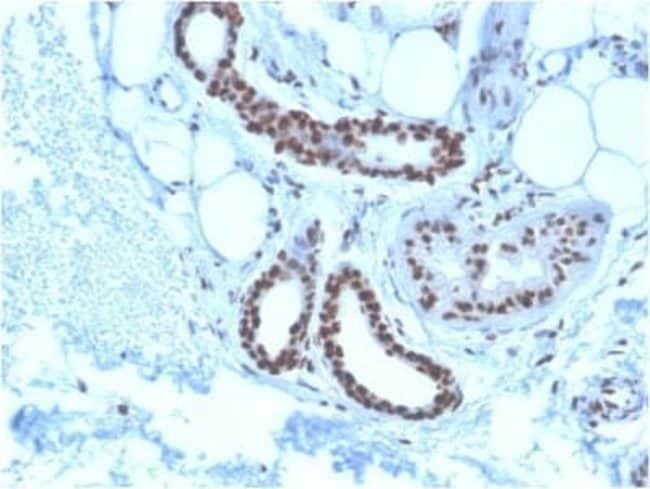 NPM1 Mouse anti-Human, Clone: NPM1/3285, Novus Biologicals:Antibodies:Primary