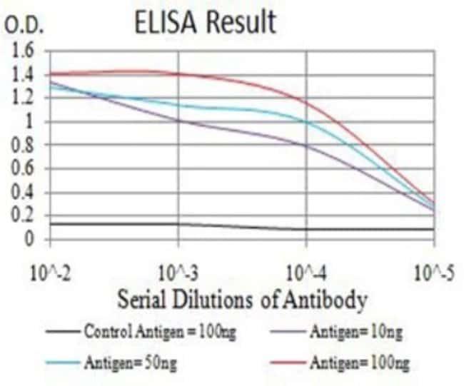 SPG3A Mouse anti-Human, Clone: 1F6B12, Novus Biologicals 0.1 ml; Unconjugated:Antibodies