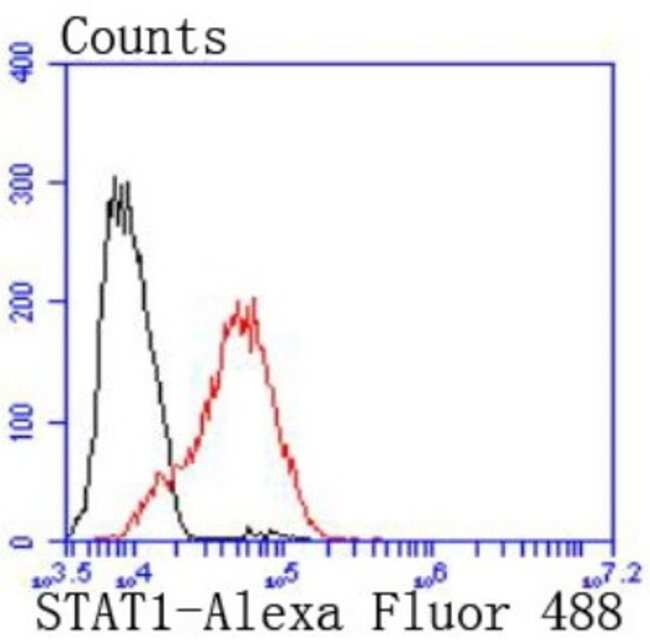STAT1 Rabbit anti-Human, Clone: SJ01-89, Novus Biologicals 100μL:Antibodies