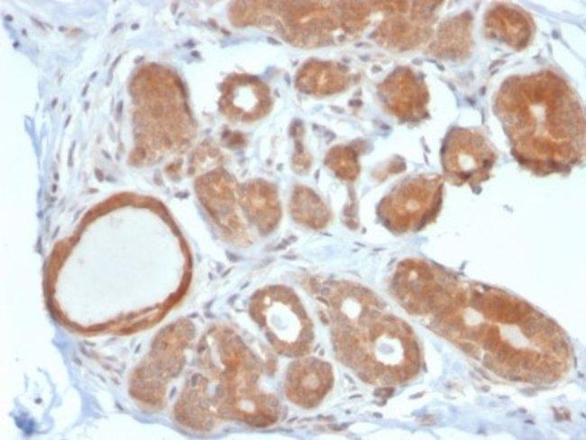 STAT5b, Mouse anti-Human, Clone: STAT5B/2611, Novus Biologicals:Antibodies:Primary