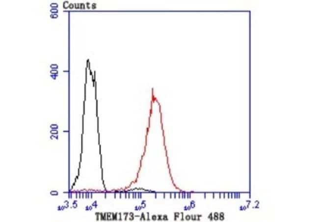SerpinA3/alpha1-Antichymotrypsin Rabbit anti-Human, Clone: JM83-29, Novus