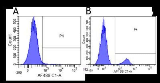 Siglec-2/CD22 Rabbit anti-Human, Cynomolgus Monkey, Rhesus Macaque, Clone: