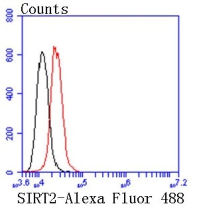 Sir2.1 Rabbit anti-Human, Clone: SN70-04, Novus Biologicals 100μL:Antibodies