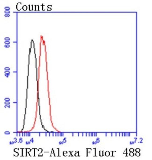 Sir2.1 Rabbit anti-Human, Clone: SN70-04, Novus Biologicals 100µL