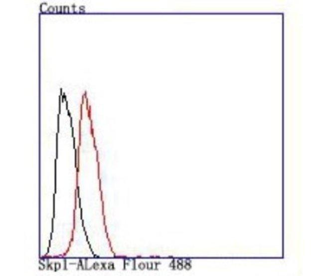 Skp1 Rabbit anti-Human, Clone: JM27-37, Novus Biologicals 100µL
