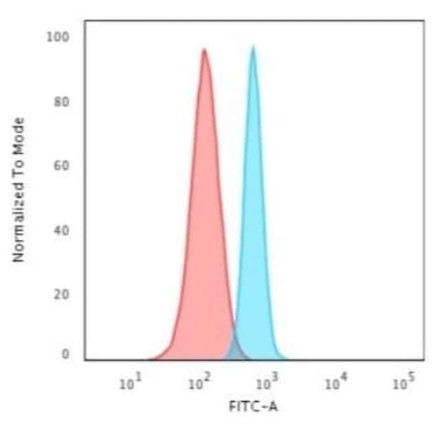 Spectrin beta 3 Rabbit anti-Human, Clone: SPTBN2/3142R, Novus Biologicals:Antibodies:Primary
