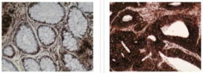 TCP1-beta Mouse anti-Drosophila, Clone: F39 P7 F11, Novus Biologicals 200µg