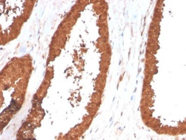 TIGIT, Mouse anti-Human, Clone: TIGIT/3017, Novus Biologicals:Antibodies:Primary