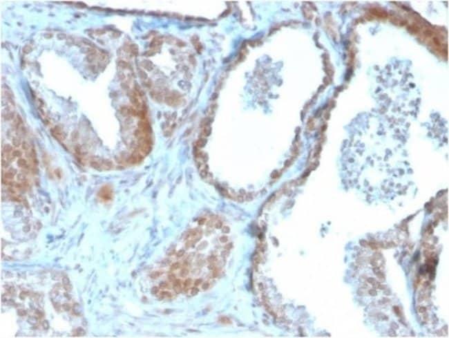 TIGIT, Mouse anti-Human, Clone: TIGIT/3106, Novus Biologicals:Antibodies:Primary