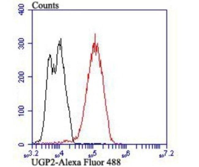 UGP2 Mouse anti-Human, Mouse, Rat, Clone: 7H1, Novus Biologicals 100 µl;