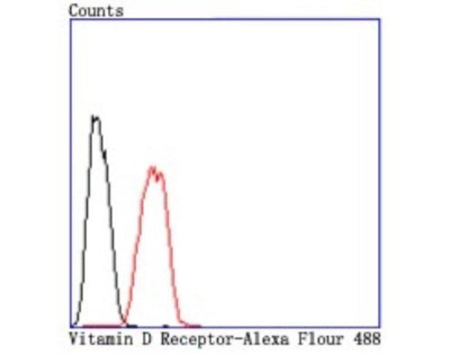 VDR/NR1I1/VitaminDReceptor Rabbit anti-Human, Clone: JA11-16, Novus Biologicals