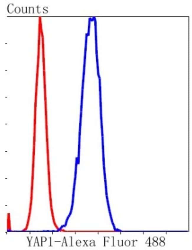 YAP1 Rabbit anti-Human, Mouse, Clone: SU33-06, Novus Biologicals 100µL