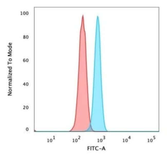 ZMYM3 Mouse anti-Human, Clone: PCRP-ZMYM3-2F10, Novus Biologicals:Antibodies:Primary