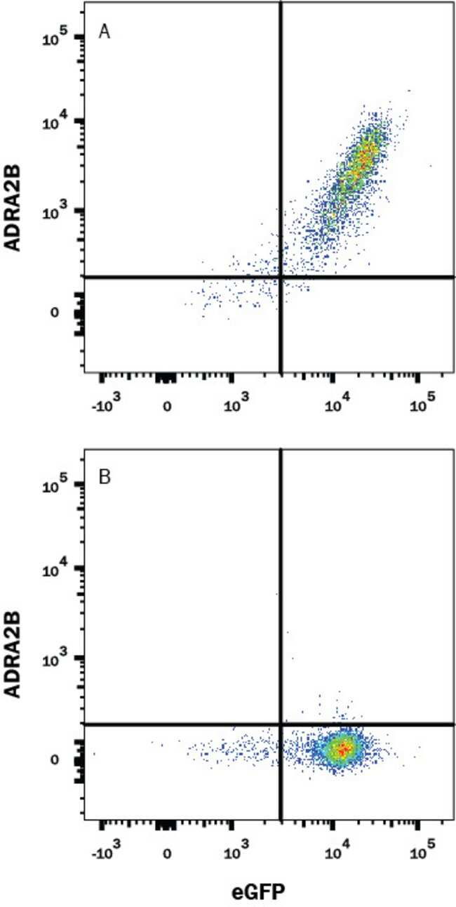 alpha-2B Adrenergic R/ADRA2B, Mouse anti-Human, Clone: 491613, R:Antibodies:Primary