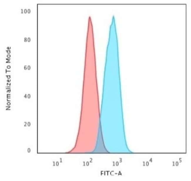 beta-Catenin, Rabbit anti-Human, Clone: CTNNB1/2030R, Novus Biologicals:Antibodies:Primary