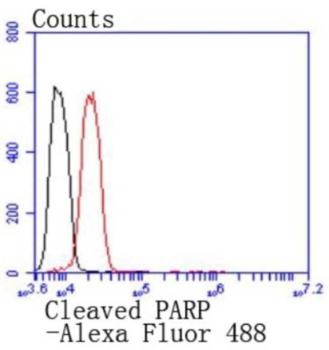 cleavedp25PARP Rabbit anti-Human, Clone: SU0314, Novus Biologicals 100µL