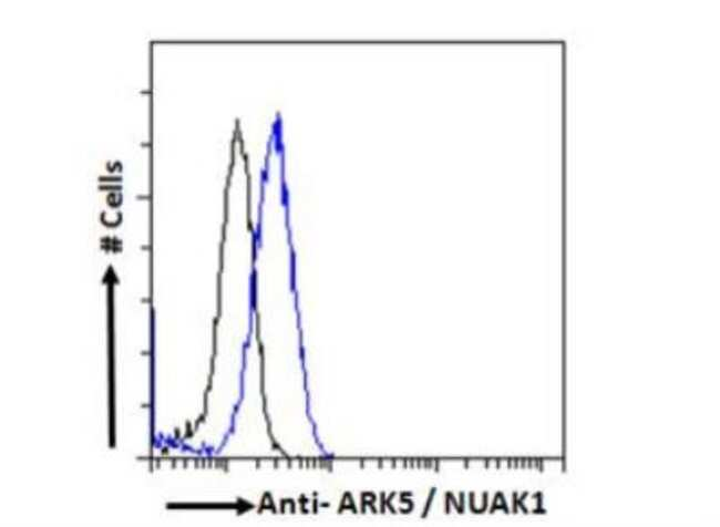anti-ARK5/NUAK1, Polyclonal, Novus Biologicals 0.1mg; Unlabeled:Life Sciences