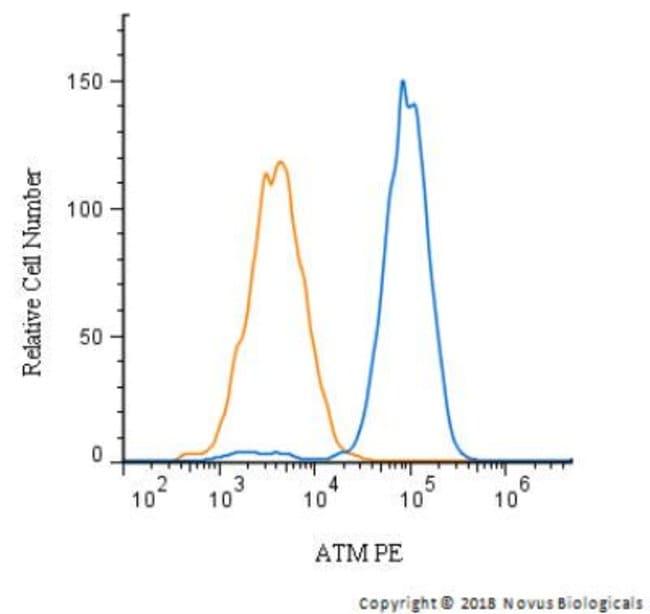 anti-ATM, Polyclonal, Novus Biologicals:Antibodies:Primary Antibodies