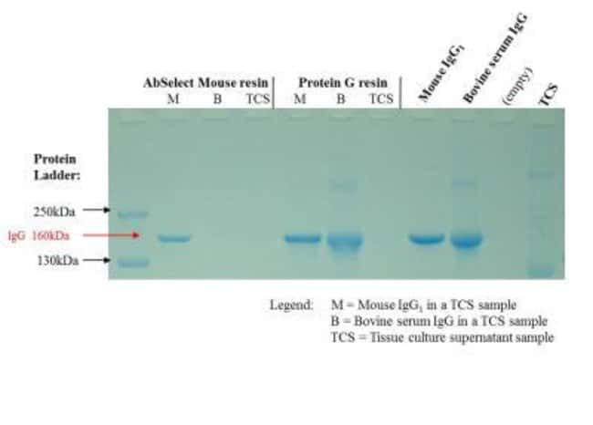 Novus BiologicalsAbSelect Mouse TCS System Antibody Purification Kit:Protein