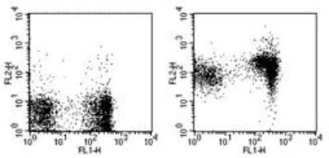 Rat anti-CD1d, Clone: 1B1, Novus Biologicals:Antibodies:Primary Antibodies