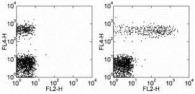 Mouse anti-CD23/Fc epsilon RII, Clone: EBVCS2, Novus Biologicals:Antibodies:Primary