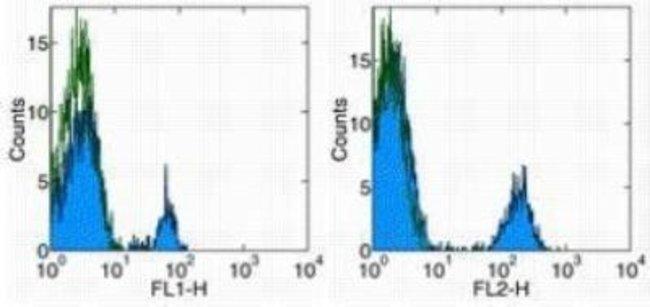 Mouse anti-CD40/TNFRSF5, Clone: 5C3, Novus Biologicals:Antibodies:Primary
