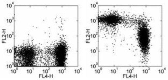 Rat anti-CD43/Sialophorin, Clone: R2/60, Novus Biologicals:Antibodies:Primary